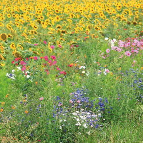 Wildblumenwiese im Heidekreis